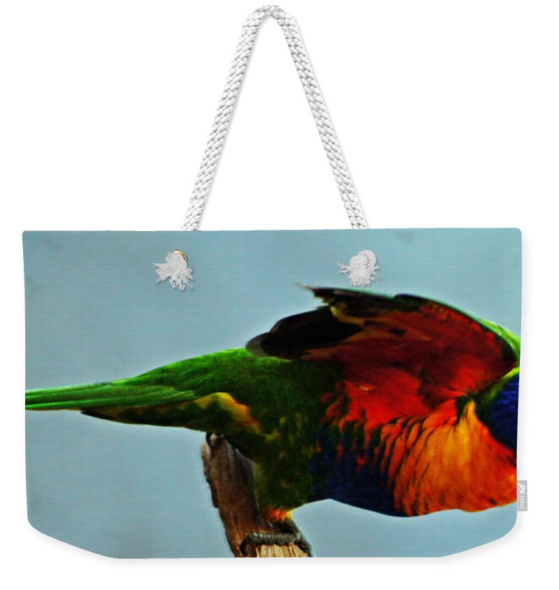 Birds Weekender Tote Bag featuring the photograph Beautiful Colorful Bird by Ben Yassa
