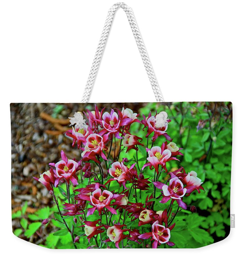 Columbine Weekender Tote Bag featuring the photograph Beautiful Columbine  by Ed Riche