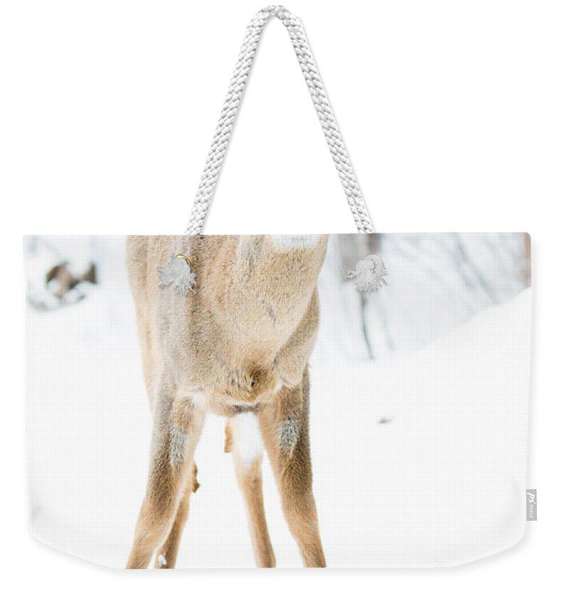 Landscape Weekender Tote Bag featuring the photograph Beautiful Deer by Cheryl Baxter