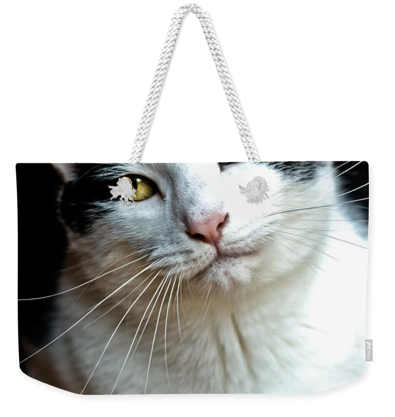 Weekender Tote Bag featuring the photograph Beautiful Jay Walker by Cheryl Baxter