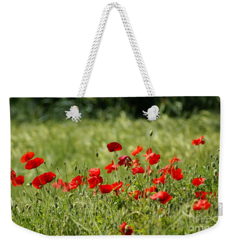 Poppies Weekender Tote Bag featuring the photograph Beautiful Poppies 1 by Carol Lynch