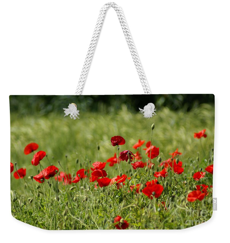 Poppies Weekender Tote Bag featuring the photograph Beautiful Poppies 2 by Carol Lynch