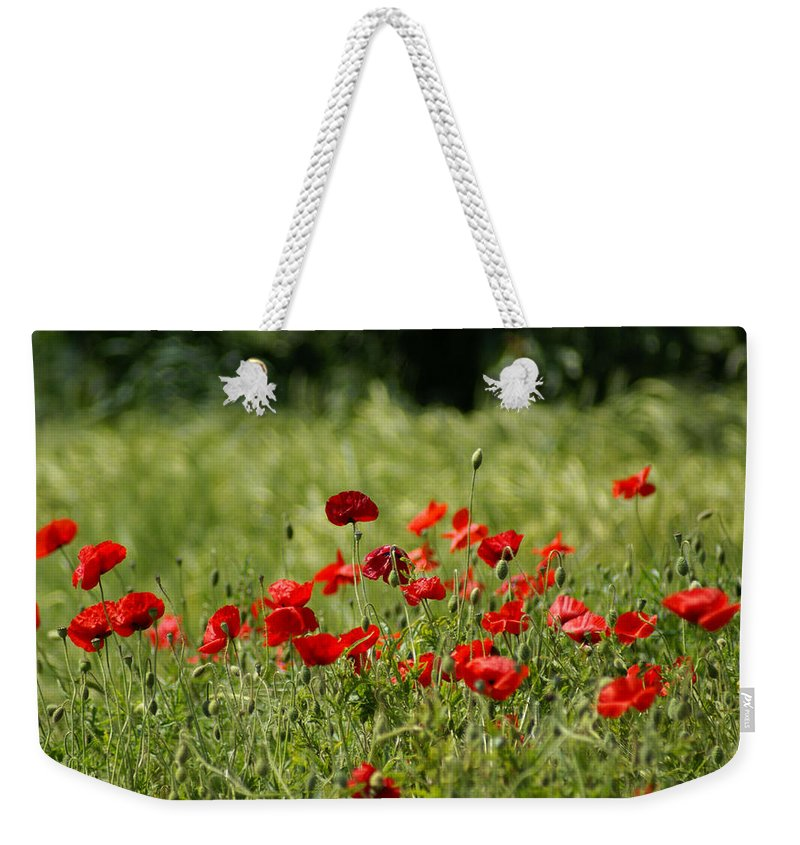 Poppies Weekender Tote Bag featuring the photograph Beautiful Poppies 3 by Carol Lynch