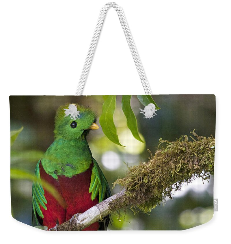 Bird Weekender Tote Bag featuring the photograph Beautiful Quetzal 1 by Heiko Koehrer-Wagner