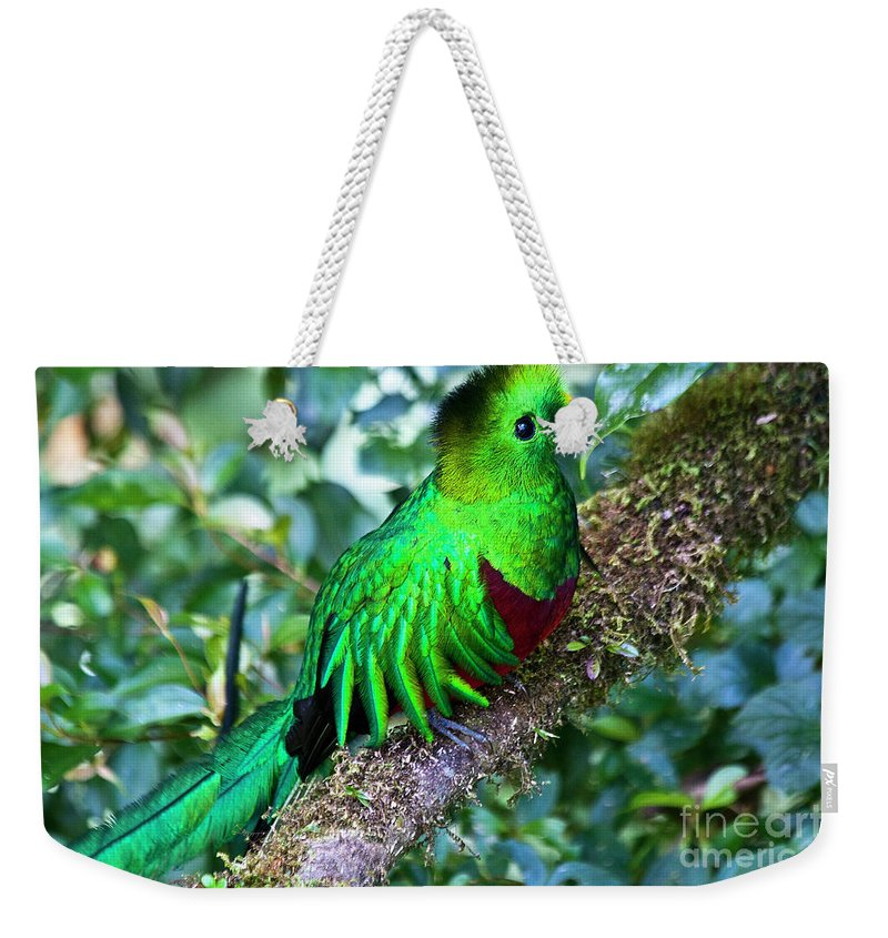 Bird Weekender Tote Bag featuring the photograph Beautiful Quetzal 2 by Heiko Koehrer-Wagner