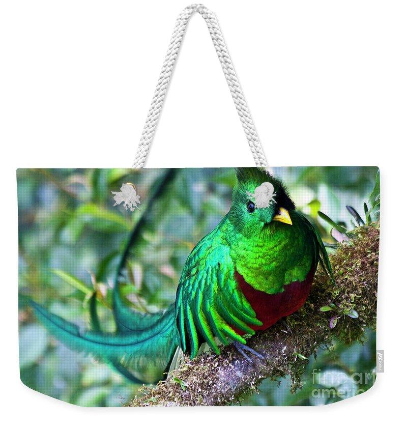 Quetzal Weekender Tote Bag featuring the photograph Beautiful Quetzal 4 by Heiko Koehrer-Wagner