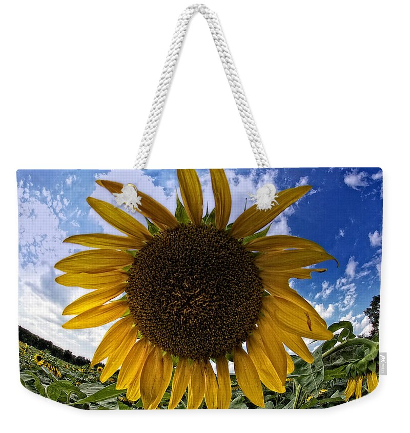 Sunflower Weekender Tote Bag featuring the photograph Beautiful Sunflower by Alice Gipson