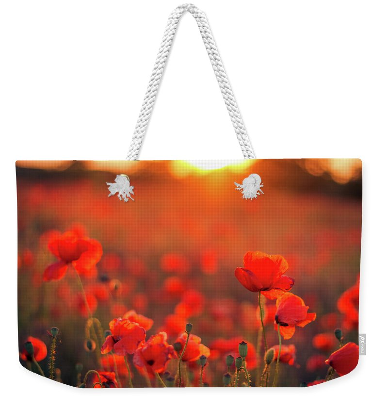 Tranquility Weekender Tote Bag featuring the photograph Beautiful Sunset Over Poppy Field by Levente Bodo