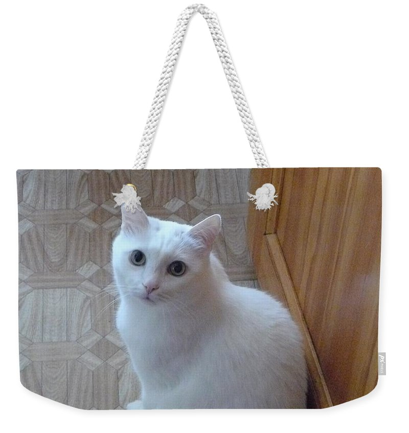 Cat Weekender Tote Bag featuring the photograph Beautiful Tail by Zina Stromberg