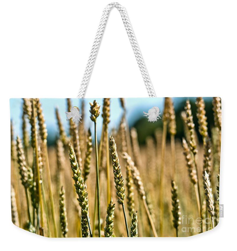 Wheat Weekender Tote Bag featuring the photograph Beautiful Wheat by Cheryl Baxter