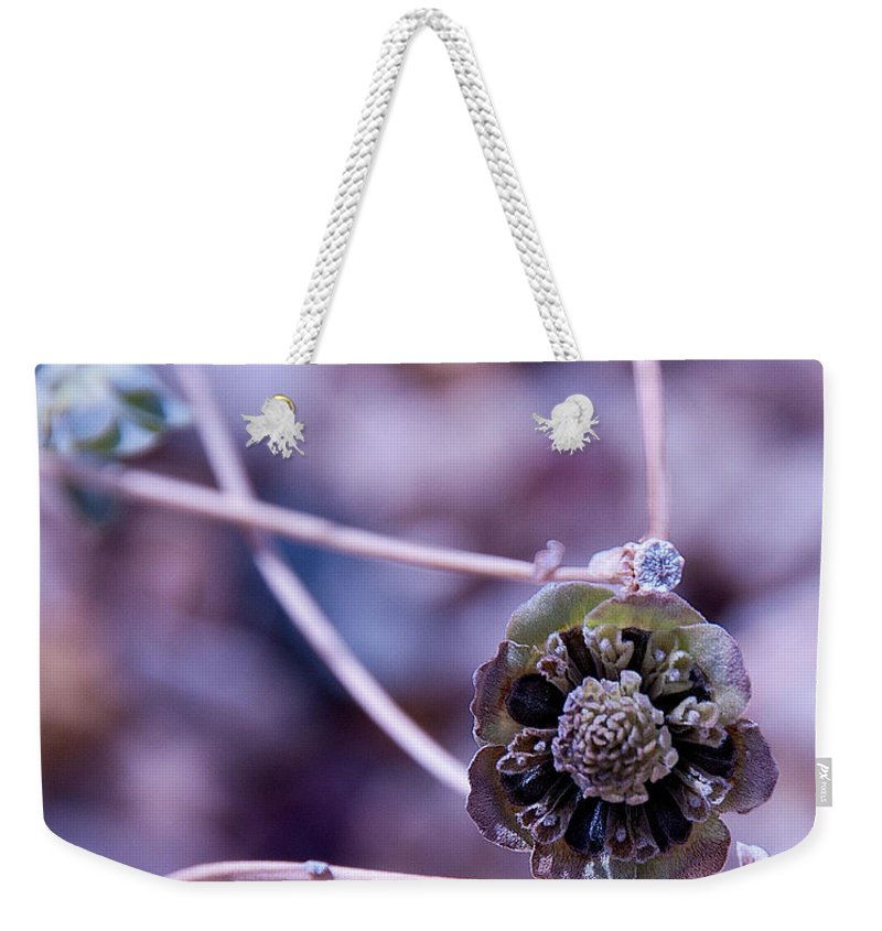 Beauty After Bloom Is A Desert Dry Flower Weekender Tote Bag featuring the photograph Beauty After Bloom by Mae Wertz
