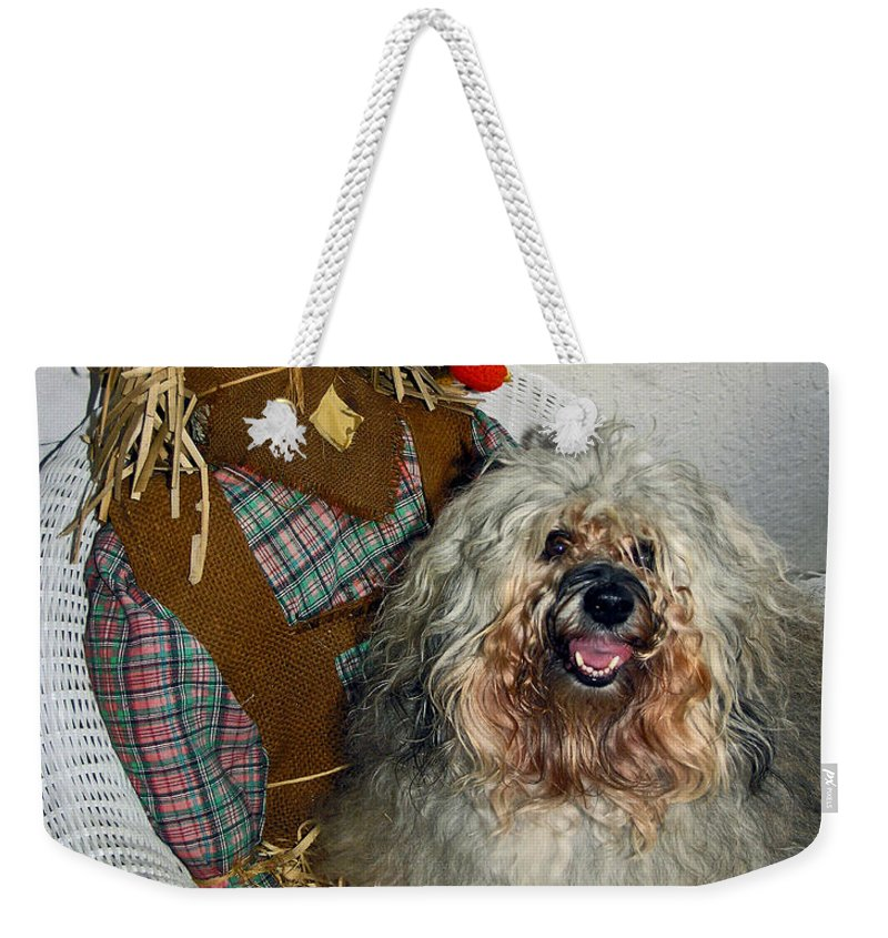Havanese Dog Weekender Tote Bag featuring the photograph Beauty And Personality by Sally Weigand