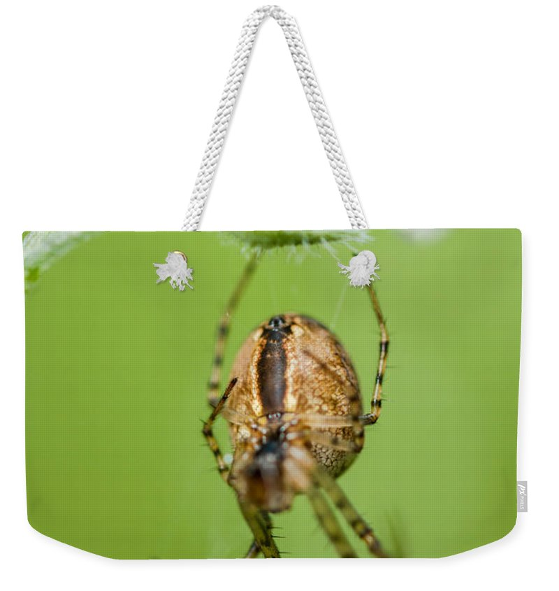 Spider Weekender Tote Bag featuring the photograph Beauty And The Beast by Danielle Silveira
