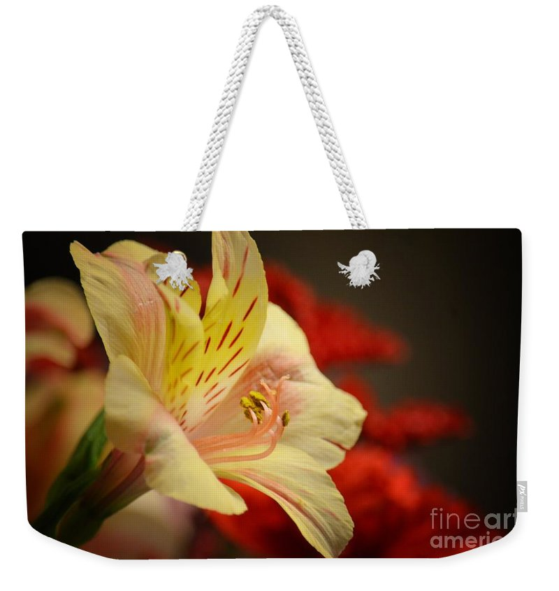 Beauty Beheld Weekender Tote Bag featuring the photograph Beauty Beheld by Maria Urso