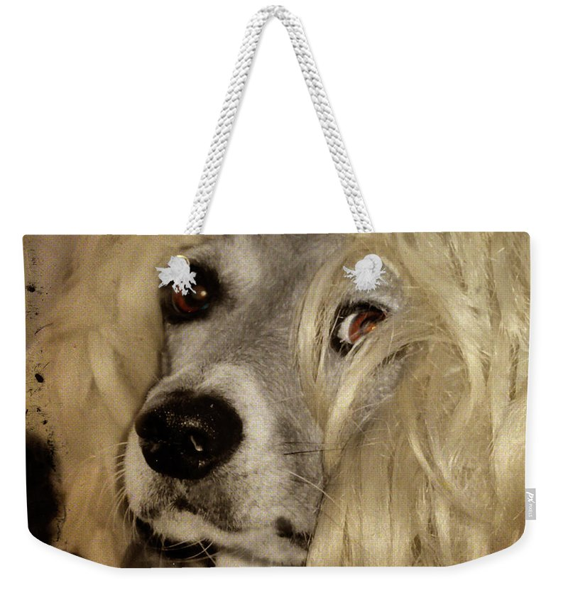 Dog Weekender Tote Bag featuring the photograph Beauty by Gothicrow Images