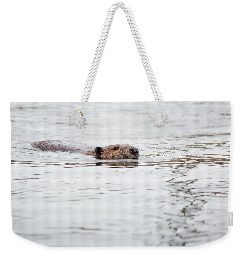 Beaver Weekender Tote Bag featuring the photograph Beaver by Dale Kincaid