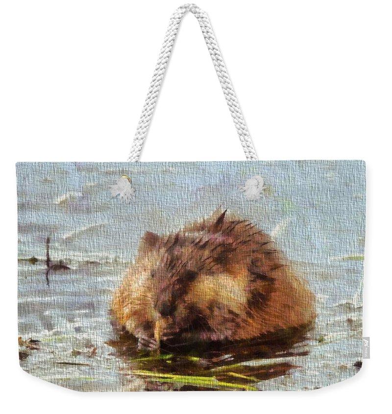 Beaver Portrait On Canvas Weekender Tote Bag featuring the painting Beaver Portrait On Canvas by Dan Sproul