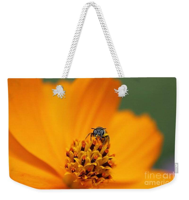 Cosmo Weekender Tote Bag featuring the photograph Bee On Cosmo by Lisa L Silva