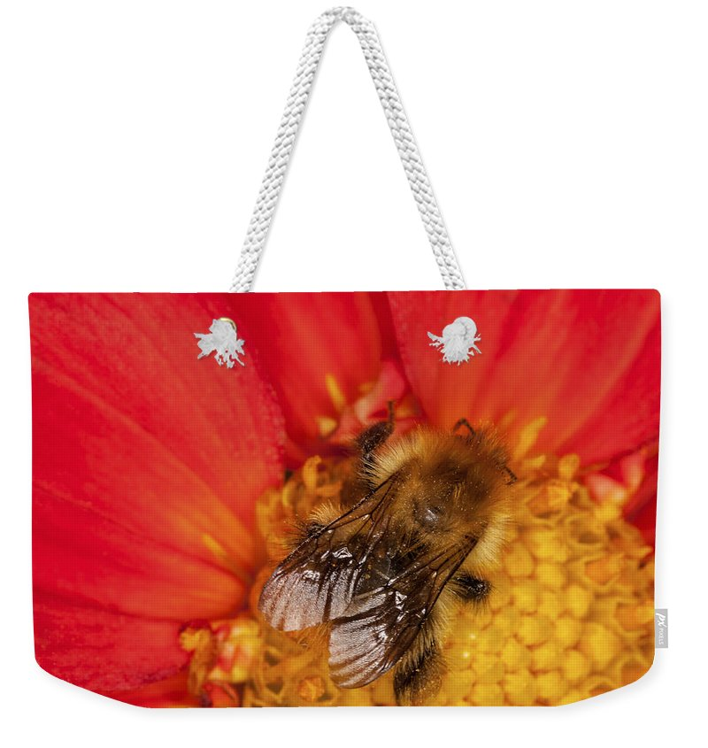 Bee Weekender Tote Bag featuring the photograph Bee On Dahlia - 2 by Diane Macdonald