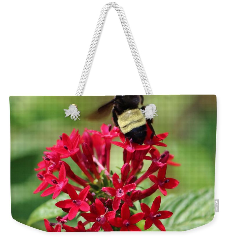 Bumble Bee Weekender Tote Bag featuring the photograph Bee On Flower Cluster by Cynthia Guinn