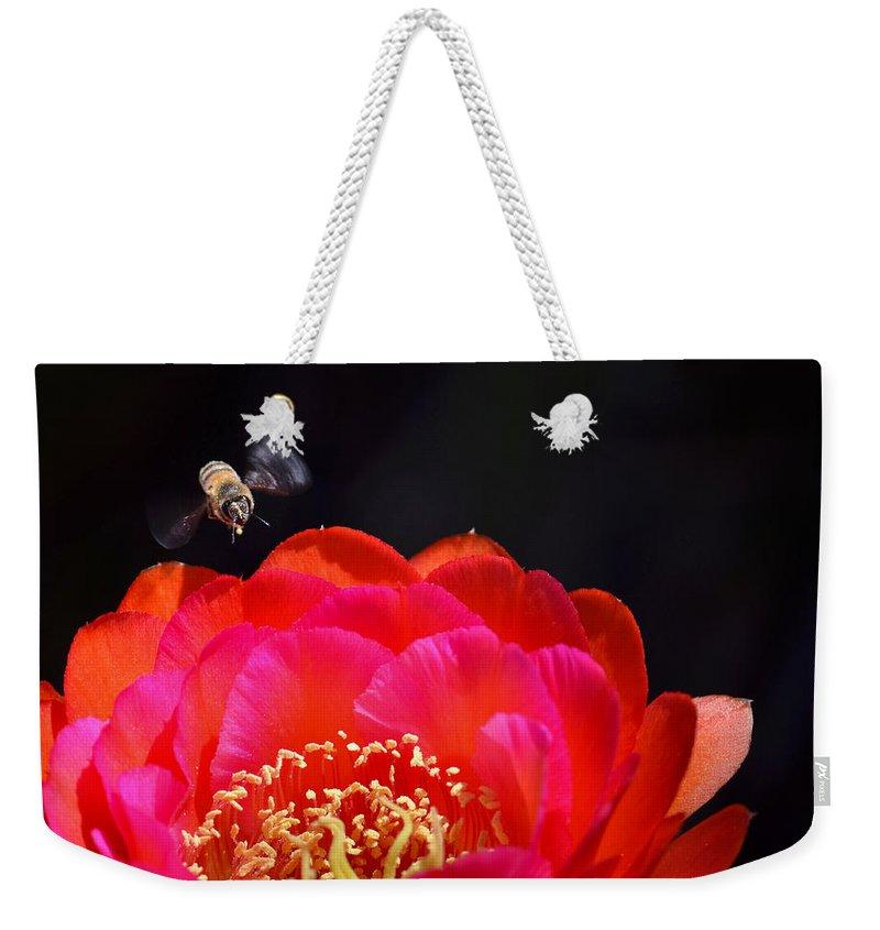 Bee Weekender Tote Bag featuring the photograph Bee Uti Full by Deb Halloran