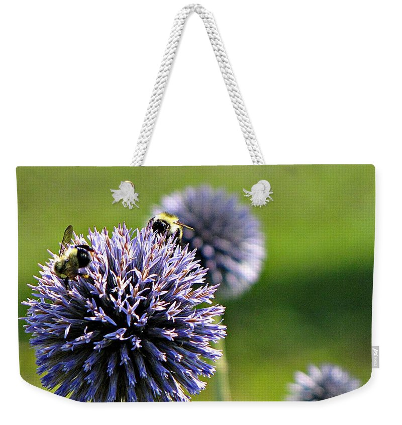 Bumblebees Weekender Tote Bag featuring the photograph Bees On Globes by MTBobbins Photography