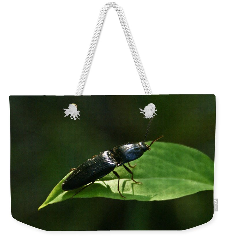 Beetle Weekender Tote Bag featuring the photograph Beetle Elateridae by Douglas Barnett