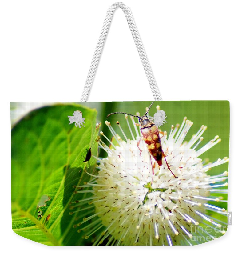 Button Bush Weekender Tote Bag featuring the photograph Beetle On Buttonbush by Optical Playground By MP Ray
