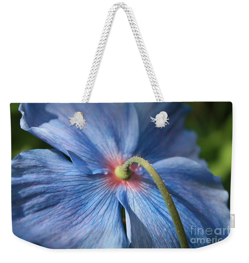 Blue Poppy Weekender Tote Bag featuring the photograph Behind The Blue Poppy by Carol Groenen