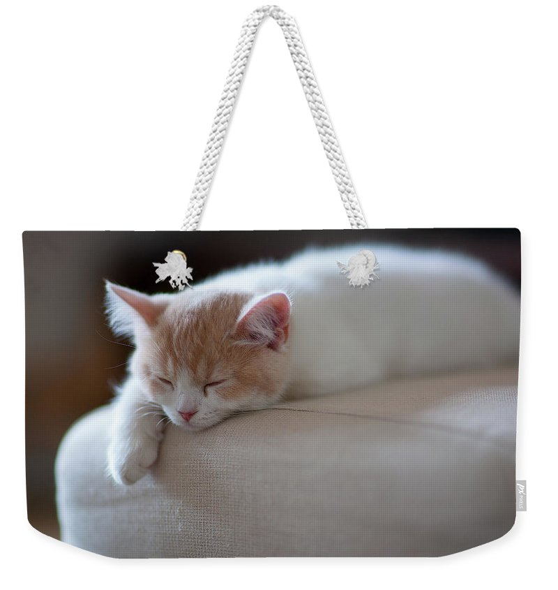 Pets Weekender Tote Bag featuring the photograph Beige And White Kitten Sleeping On by Benjamin Torode