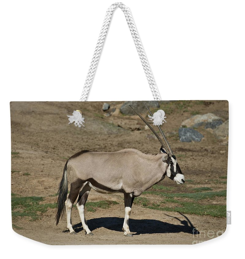 Beisa Oryx Weekender Tote Bag featuring the photograph Beisa Oryx by Anthony Mercieca