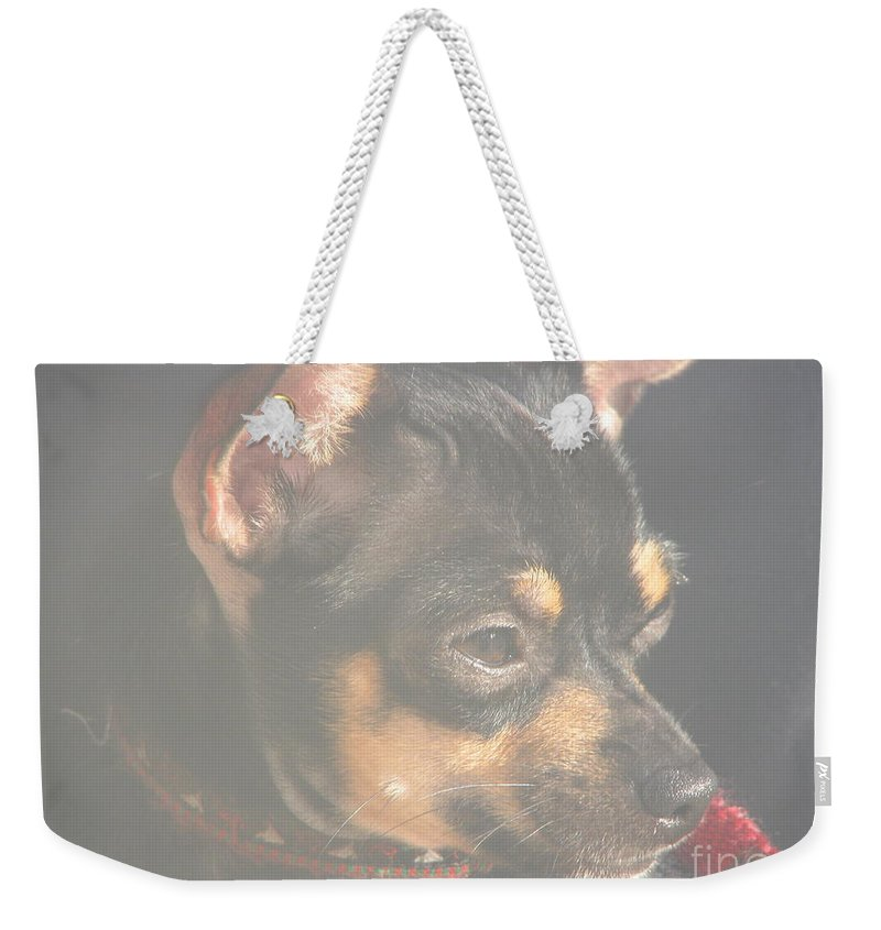 Art For The Wall...patzer Photography.chihuahua Weekender Tote Bag featuring the photograph Bella by Greg Patzer