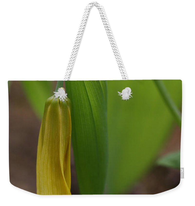 Bellwort Weekender Tote Bag featuring the photograph Bellwort Or Uvularia Grandiflora by Daniel Reed