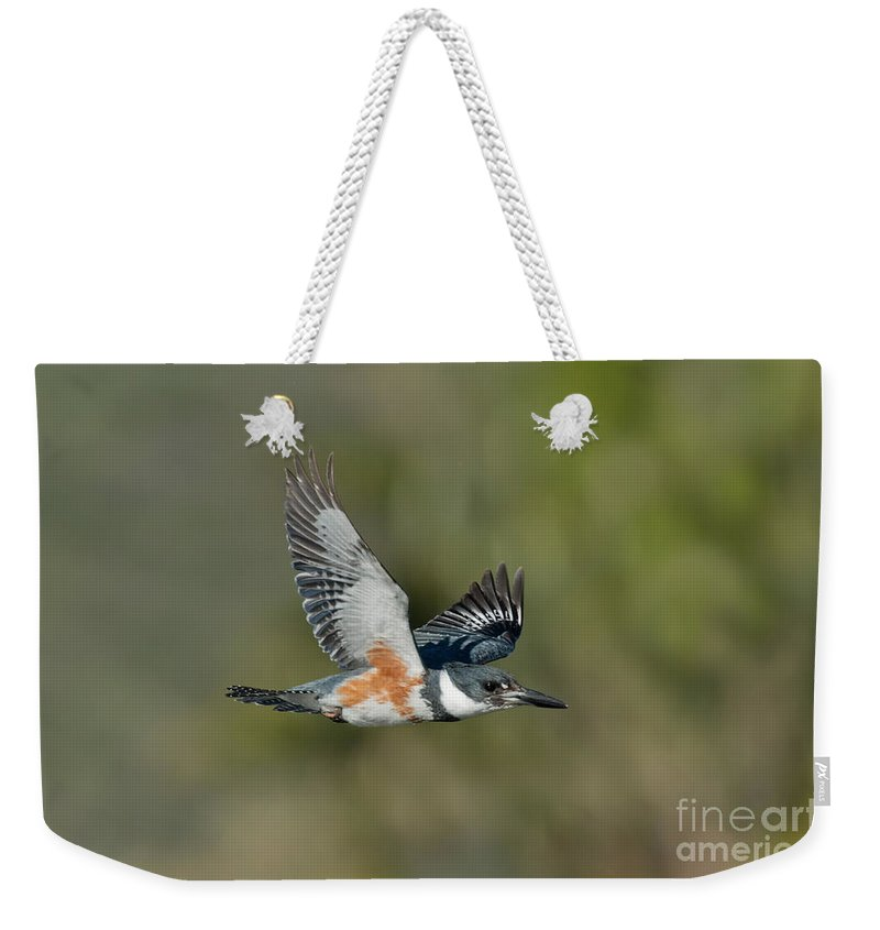 Belted Kingfisher Weekender Tote Bag featuring the photograph Belted Kigfisher Female Flying by Anthony Mercieca