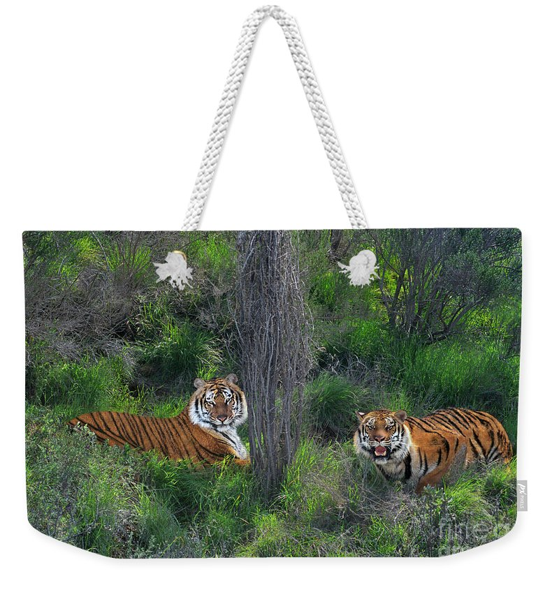 Bengal Tigers Weekender Tote Bag featuring the photograph Bengal Tigers On Grassy Hillside Endangered Species Wildlife Rescue by Dave Welling