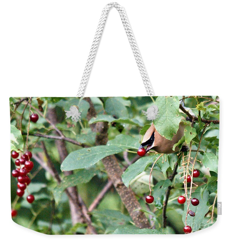 Cedar Waxwing Weekender Tote Bag featuring the photograph Berry Picker by Cheryl Baxter
