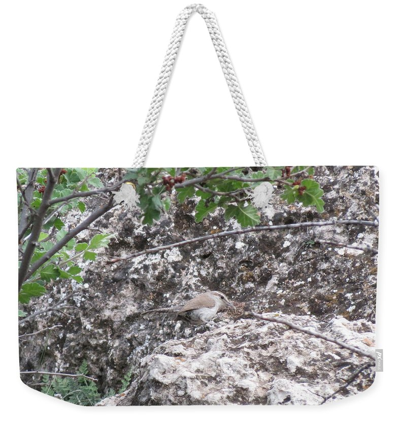 Aimee Mouw Weekender Tote Bag featuring the photograph Bewick's Wren On The Canyon Wall by Aimee Mouw