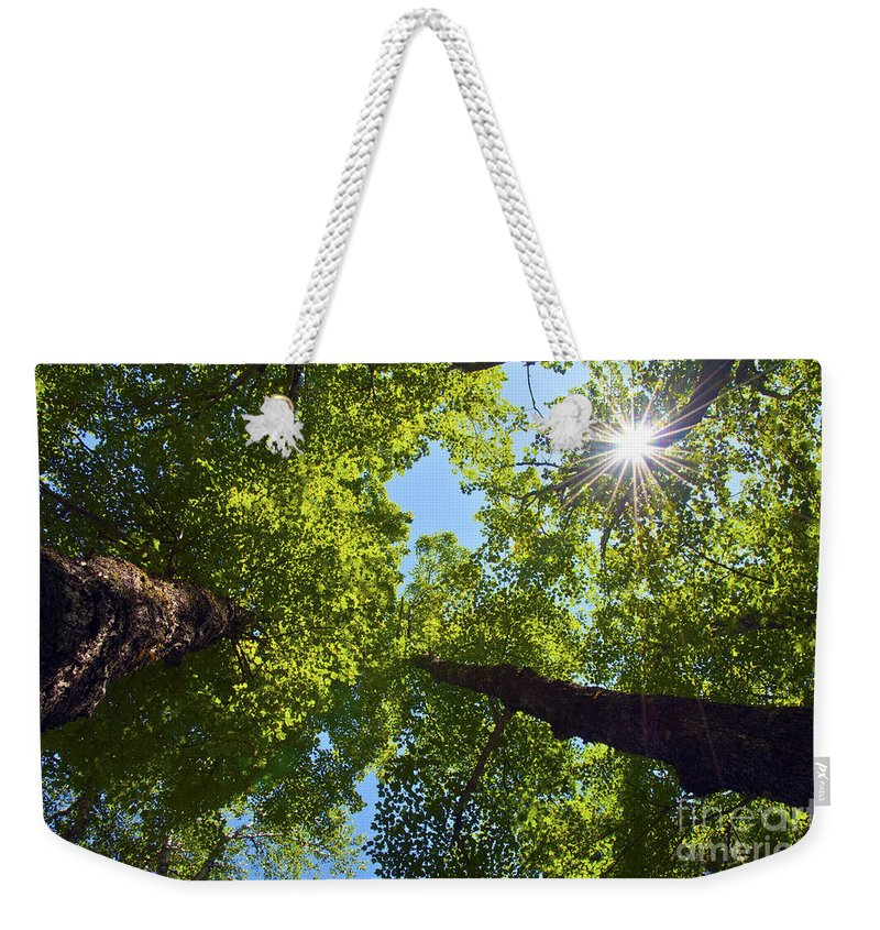 Trees Weekender Tote Bag featuring the photograph Beyond by Glenn Gordon