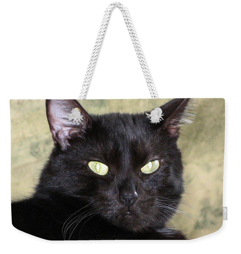 Black Cat Weekender Tote Bag featuring the photograph Big Bad Voodoo Kitty by Dan McCafferty