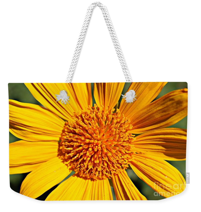 Sun Weekender Tote Bag featuring the photograph Big Bright Bold by Clare Bevan