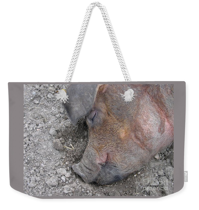 Pig Weekender Tote Bag featuring the photograph Big Dreamer by Ann Horn