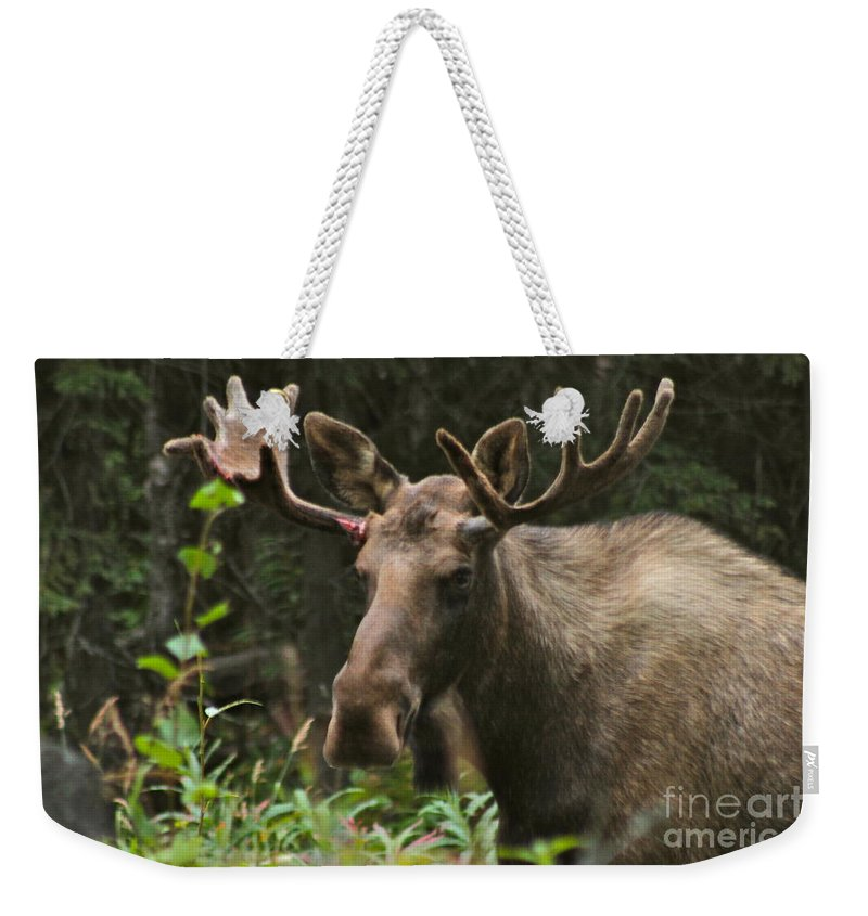 Moose Weekender Tote Bag featuring the photograph Big Guy by Rick Monyahan