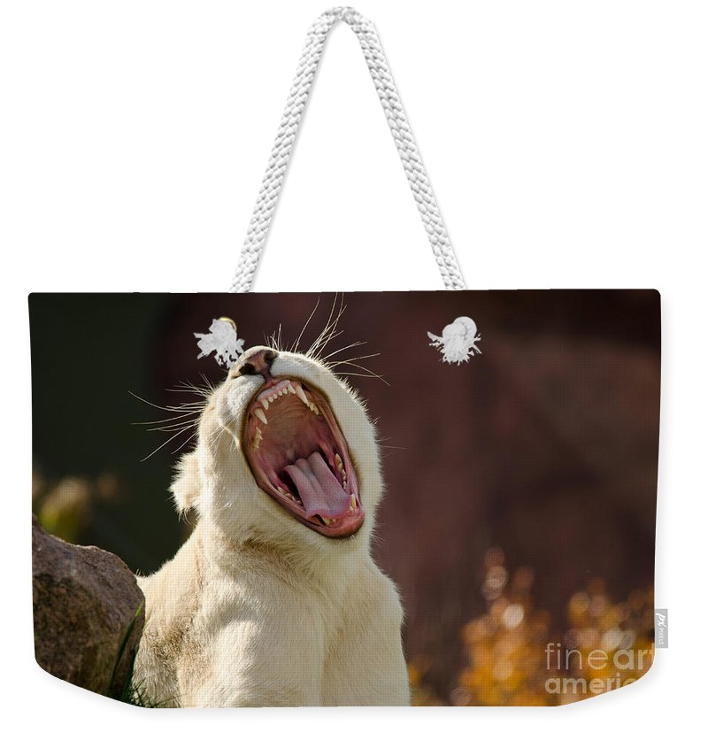 Lion Weekender Tote Bag featuring the photograph Big Mouth by Les Palenik