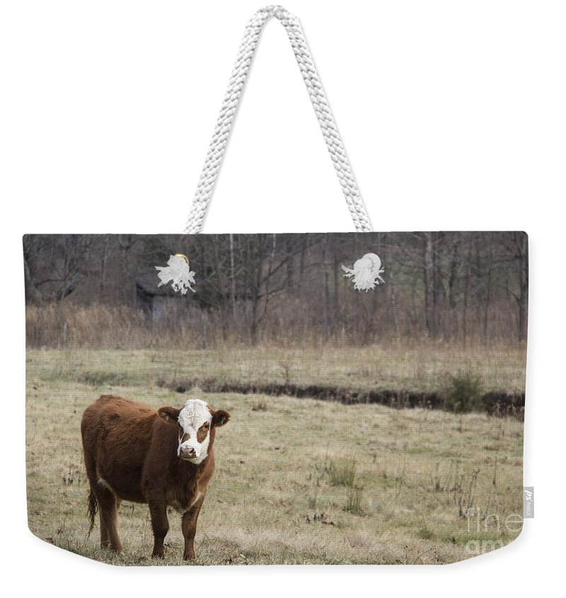 Cow Weekender Tote Bag featuring the photograph Big Red 2 by Teresa Mucha
