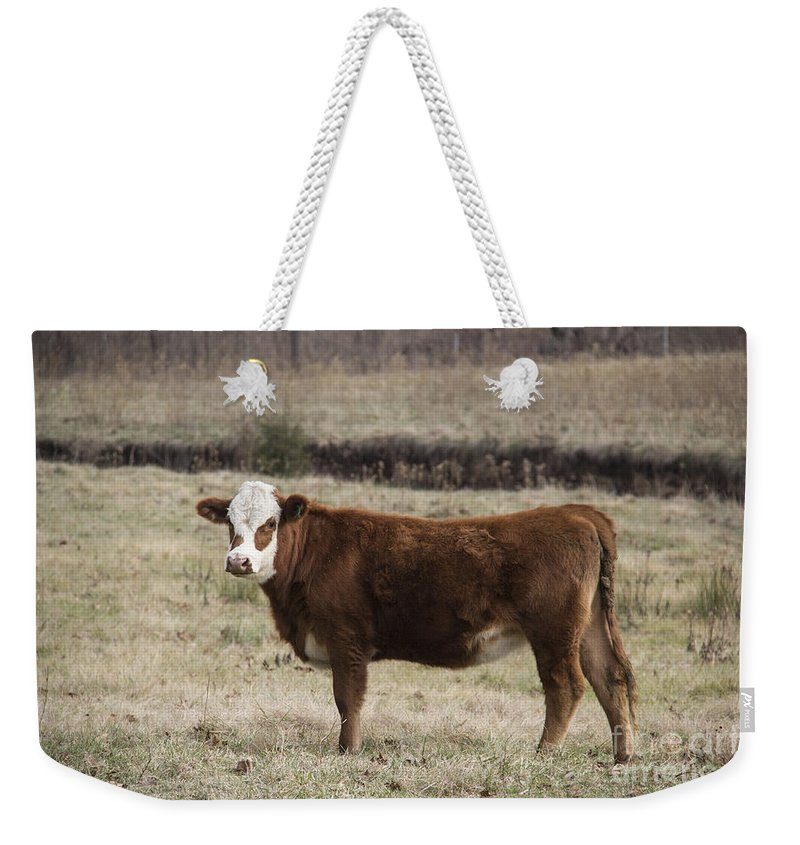 Cow Weekender Tote Bag featuring the photograph Big Red by Teresa Mucha