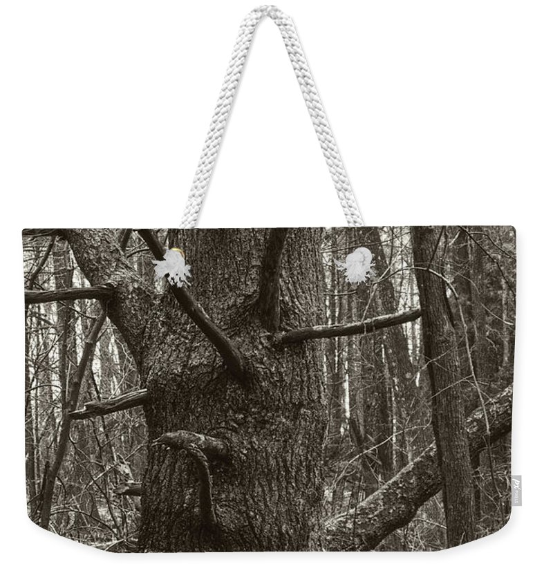 Tree Weekender Tote Bag featuring the photograph Big Tree by David Stone