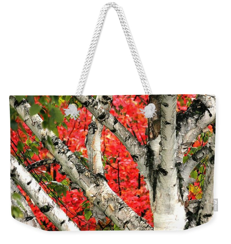 Birch Weekender Tote Bag featuring the photograph Birch Eclipsing Maple by Doris Potter