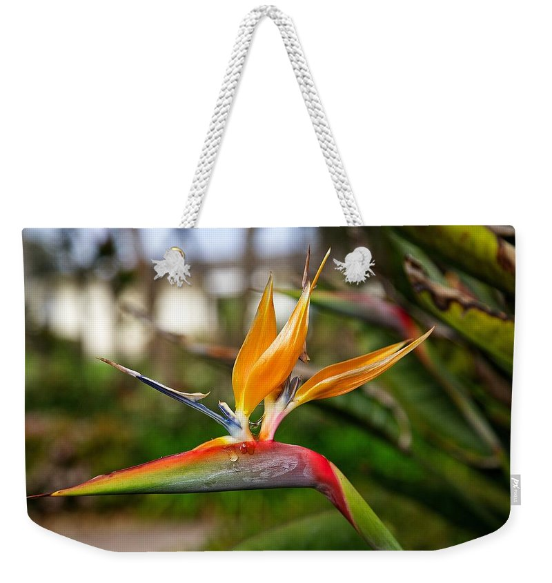 Bird Of Paradise Weekender Tote Bag featuring the photograph Bird Of Paradise by Dave Files