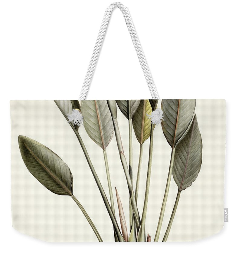 19th Century Weekender Tote Bag featuring the painting Bird Of Paradise by Pierre Joseph Redoute