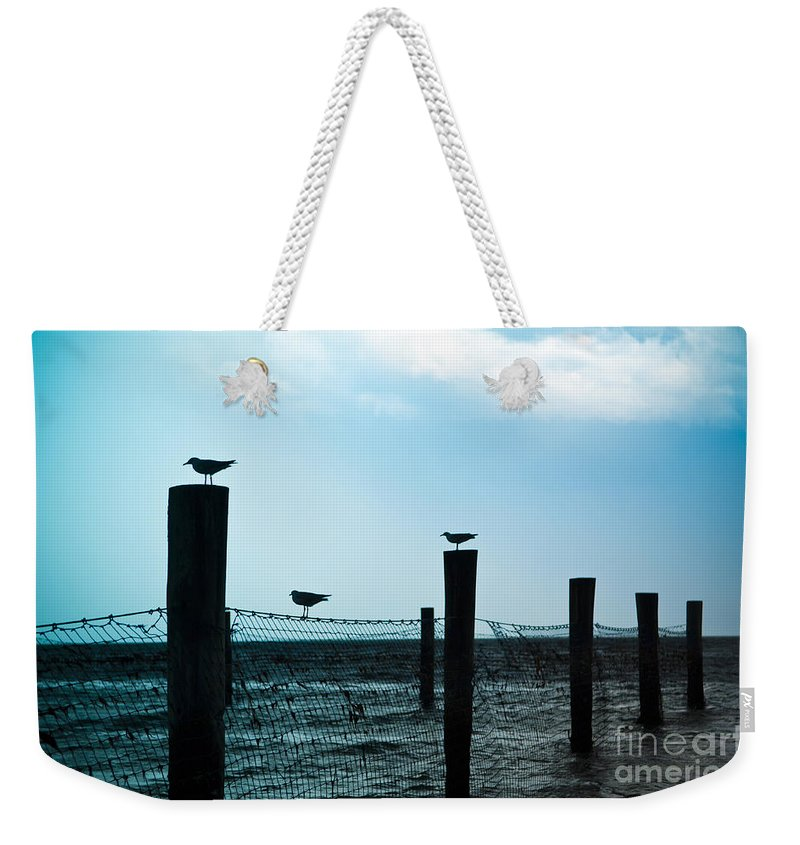Birds Weekender Tote Bag featuring the photograph Bird Silhouettes by Tim Hester
